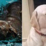 Ραβέλ και Μυρτώ: Οι πρώτοι σκύλοι-Μουσειοπαιδαγωγοί στην Ελλάδα