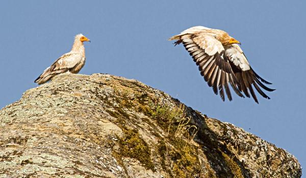 Ευρωπαϊκή Γιορτή Πουλιών: Εκδήλωση στο Μεσολόγγι