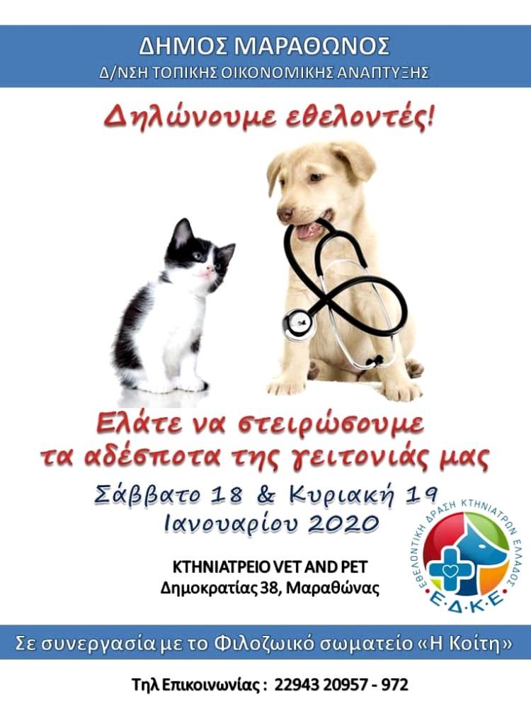 στειρώσεις αδέσποτων ζώων στο Δήμο Μαραθώνος Αφίσα της Δράσης