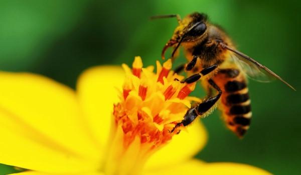 Διαγωνισμός Best Bee Balcony (BBB) στο Δήμο Ν. Προποντίδας