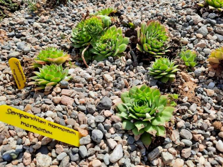 Πάρκο Καρδίας στο Δήμο Θέρμης τοποθέτηση 1000 νέων φυτών από 70 είδη