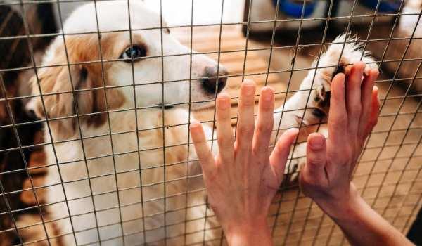 Καταφύγιο αδέσποτων ζώων στο Δήμο Ωραιοκάστρου
