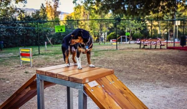 Πάρκο σκύλων σε δύο σημεία στο Δήμο Κορυδαλλού