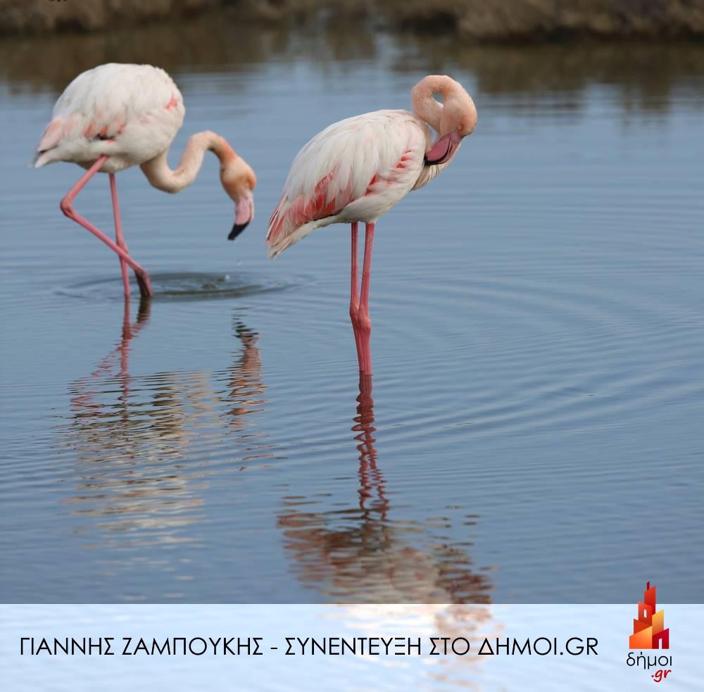 Χαραγμένες στη μνήμη του μένουν εικόνες σαν και αυτή με τα ροζ φλαμίγκο σε όποιον επισκεφτεί το Δέλτα του Έβρου