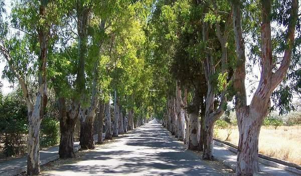 Μητρώο δέντρων και εργασίες Πρασίνου στον Δήμο Ρόδου