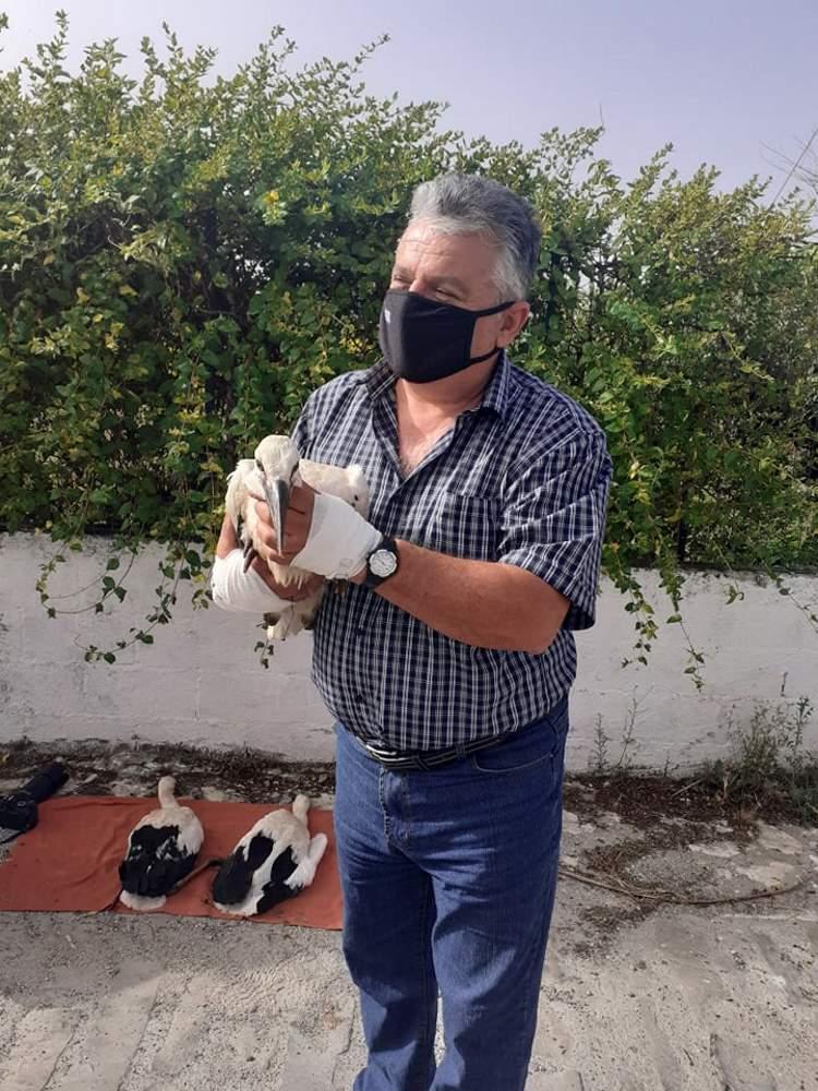 80 πελαργοί δακτυλιώθηκαν στο Δήμο Πωγωνίου για προστασία και παρακολούθηση